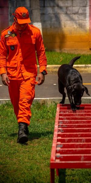 Corpo de Bombeiros conta com 'estagiários' de quatro patas