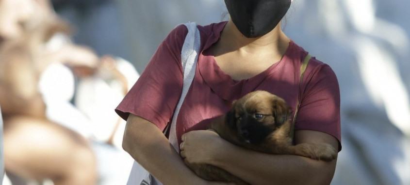 Centro de Proteção Animal Fazenda Modelo faz atendimento clínico é cirúrgico de graça para cães e gatos.