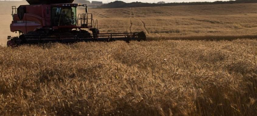 Colheita de trigo, colheita de grãos