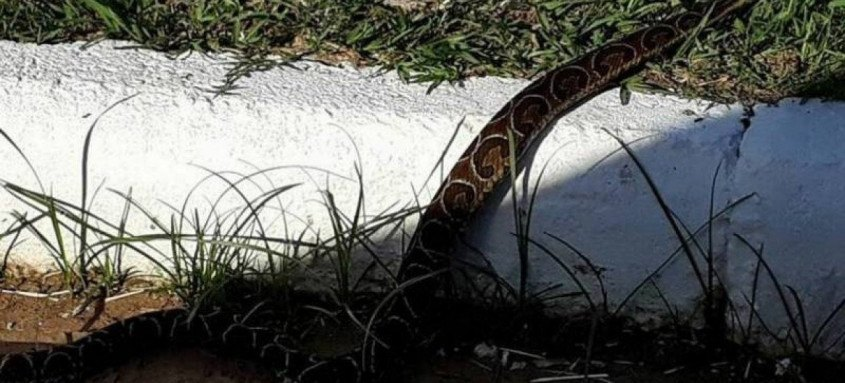 Aumento da temperatura é a principal causa do surgimento de serpentes na cidade