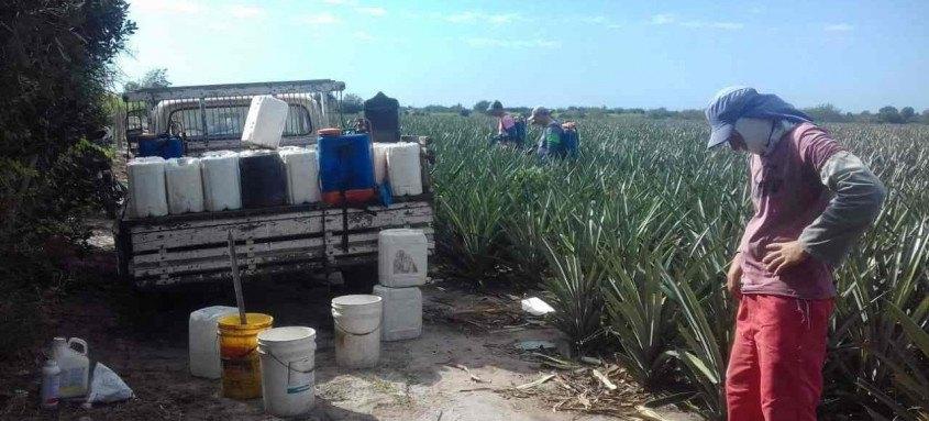 Sistema desenvolvido pela Secretaria de Agricultura faz monitoramento on-line dos produtos