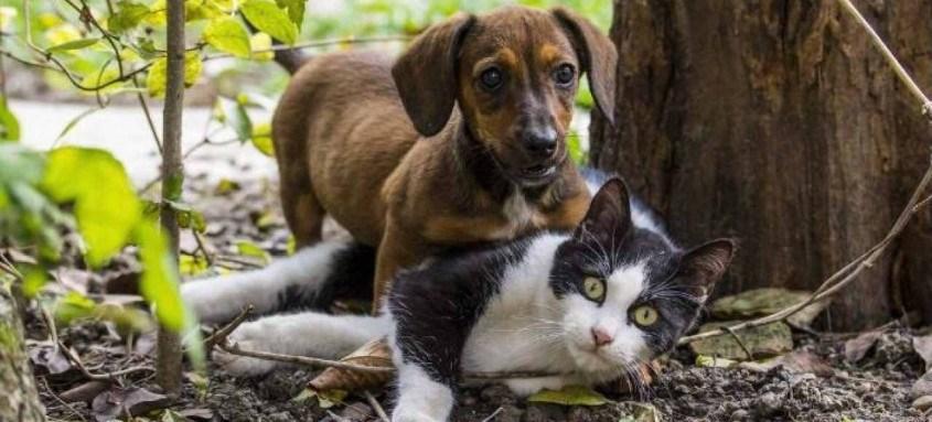 São oferecidas 766 castrações para cadelas, 874 para cães, 1.198 para gatas e 2.296 gatos