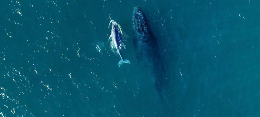 Ao longo do período são avistadas baleias Franca e Jubarte