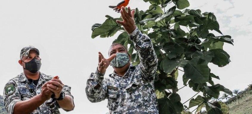 Pássaros foram retirados das gaiolas e reintroduzidos em uma área de preservação ambiental
