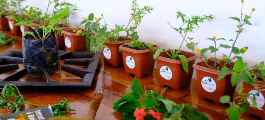 Prefeitura de Mangaratiba realiza curso sobre Plantas Alimentícias não Convencionais (Pancs)