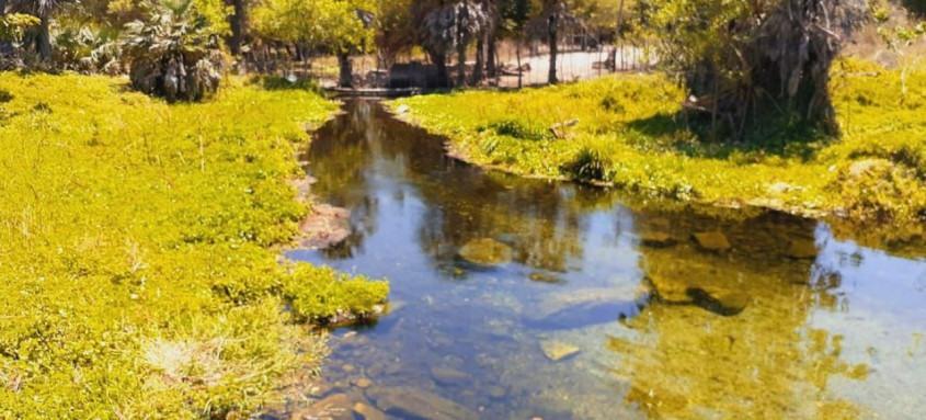 Projetos de reflorestamento ajudam a aumentar volume dos rios